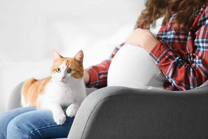 болезнь кошек опасная для беременных